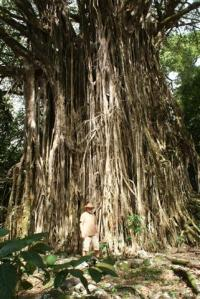 Bill by giant Banyan tree