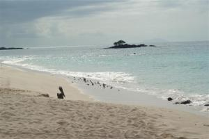 A beautiful cove with pelicans on the beach
