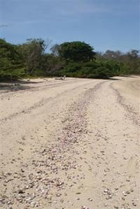 The beautiful beach on Mogo Mogo covered in pink shells