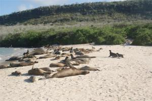 Sea lions lying in the sun