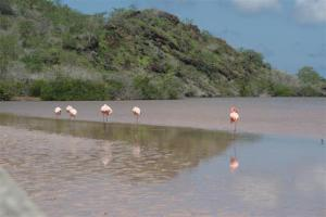 Flamingos in the pink lagoon