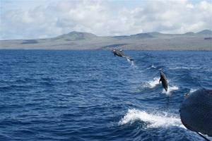 Dolphins leaping out of our wake