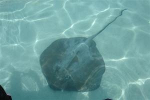 Stingrays by our feet