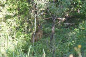I spotted this beautiful kangaroo