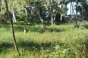 These kangaroos were running wild around the resort