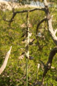 Each spear head had as many as a dozen butterflies on each one