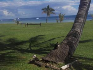 Kookaburras sitting on a tree next to the resort (nothing in the resort worth photographing)