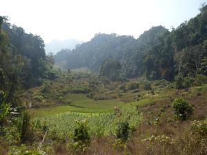 Trekking through the jungle