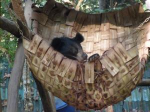 Beautiful rescued brown bear, love him.