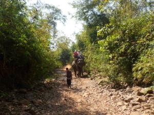 The mahout guided her along