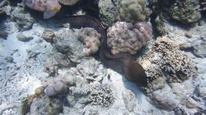 2 metre Moral eel