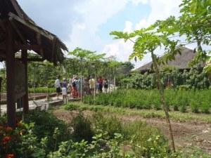 Walking around the fruit farm