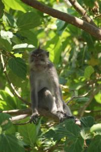 Sweet monkey