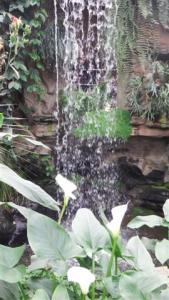 Beautiful waterfall in the tropical greenhouse