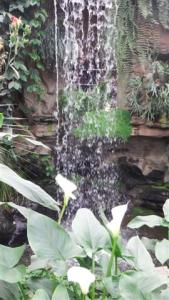 Beautiful waterfall in the tropical greenhouse
