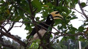 Harry the Hornbill