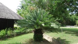 Palms in the resort