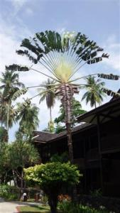 Beautiful fan palm