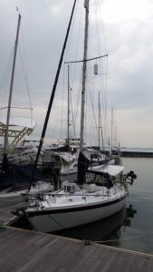 Camomile in Straitsquay marina