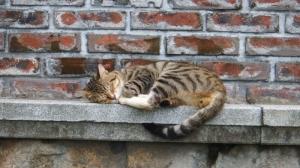 Sleepy chap