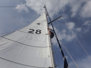 Bill up the mast retrieving the uphaul (rope)