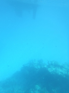 The bommie below the rudder