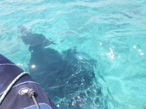 A manta under the dinghy