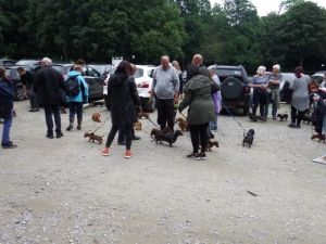 20+ sausage dogs going for a walk