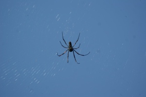 and this horrid spider which was about the size of my palm