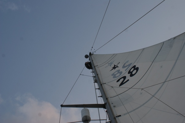 Bill at the top of the mast