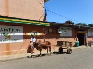 A zebu cart